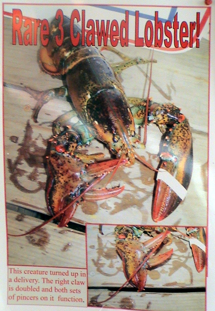 The Amazing Three Clawed Lobster